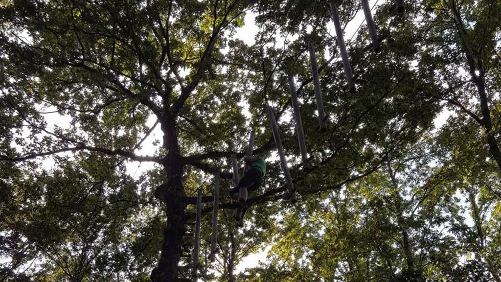 Flink klimmen en klauteren tussen de boomtoppen.