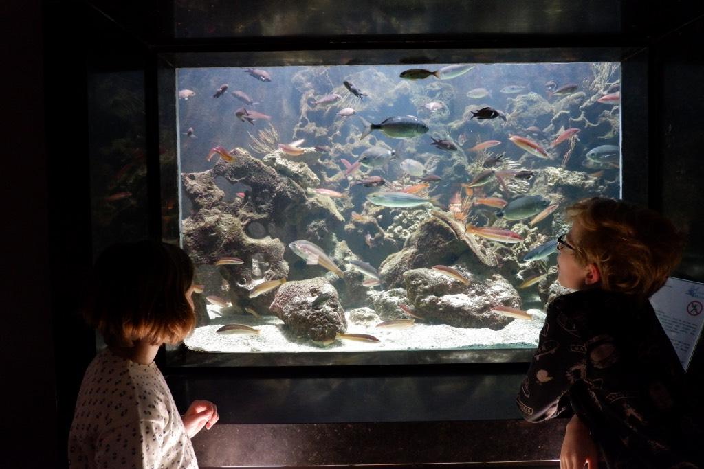 Aquarium-Museum Luik