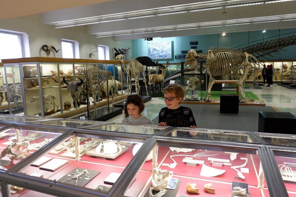 Aquarium-Museum: het leukste museum van Luik