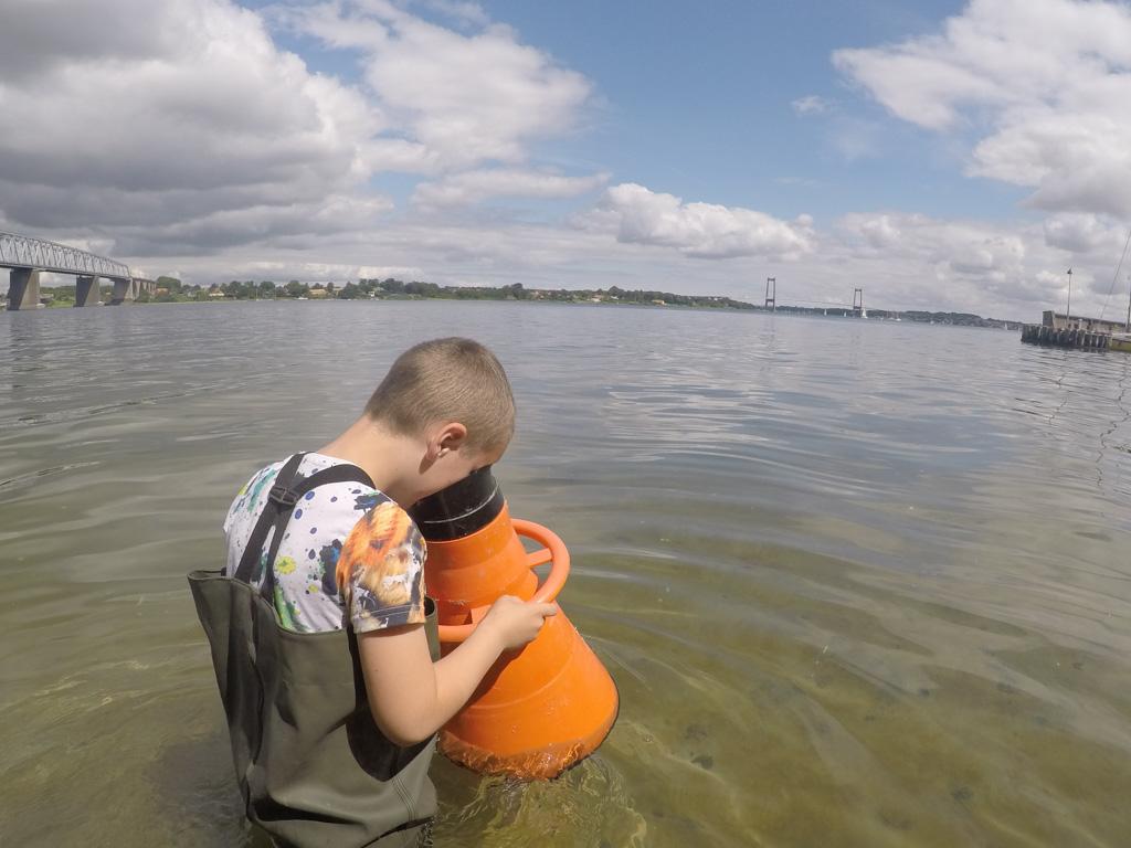 In de Lillebaelt op zoek naar het onderwaterleven.