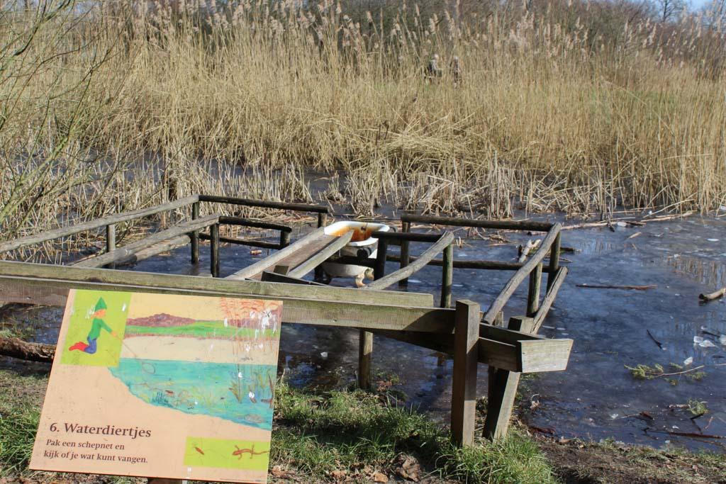 Als het water niet bevroren is kun je hier waterdiertjes bestuderen.