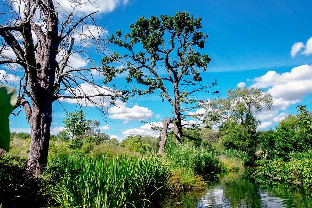 Mooi aangelegde meren met begroeiing in de Dublin Zoo