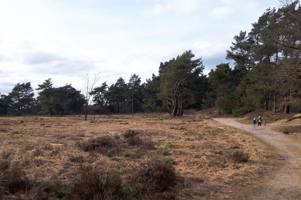 Heide, bos en zandgebied. Genoeg afwisseling tijdens het wandelen bij Radio Kootwijk.