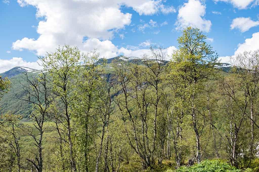 Het uitzicht vanuit ons vakantiehuisje bij Borgund