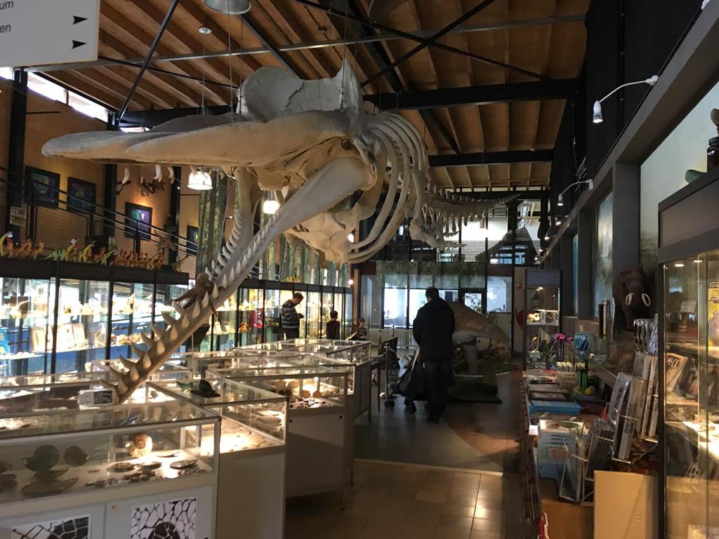 De museumwinkel met het potvisskelet.