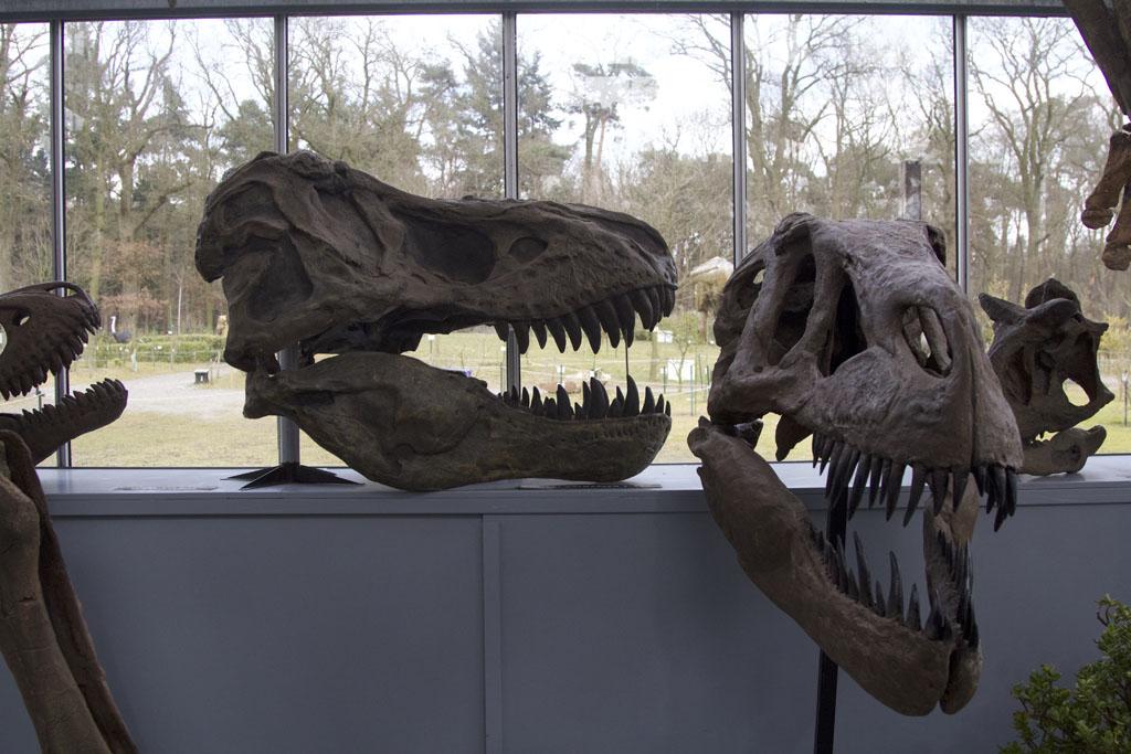 Dinosaurussen waren echt heel groot.