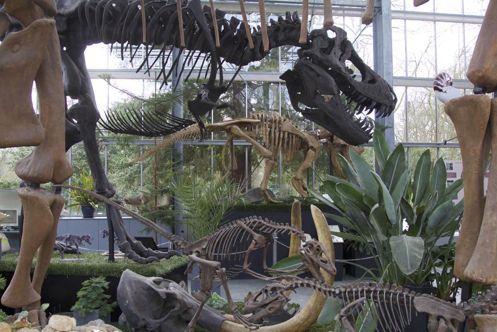 De dinosaurushal: het pronkstuk!