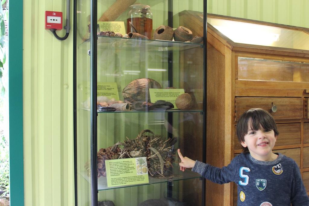 Exotische en enorme zaden in de vitrinekasten, zoals een reuze-dennenappel.