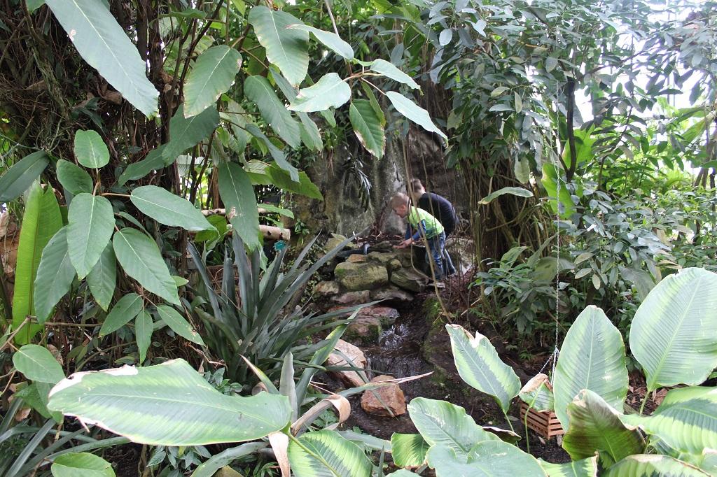 De route gaat door de jungle.