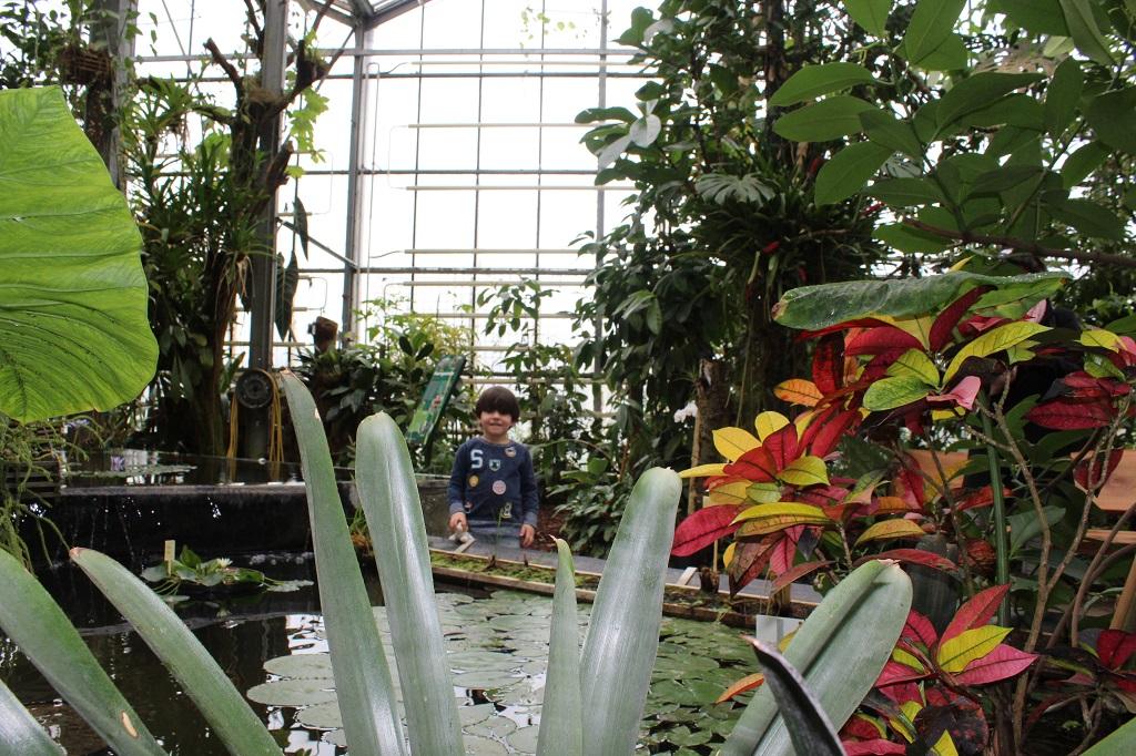 Prachtige kleurrijke planten en een mooie vijver in de tropische kas.
