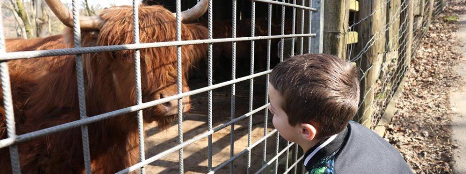 Parc Animalier de Bouillon, de dierentuin in het zuiden van de Ardennen