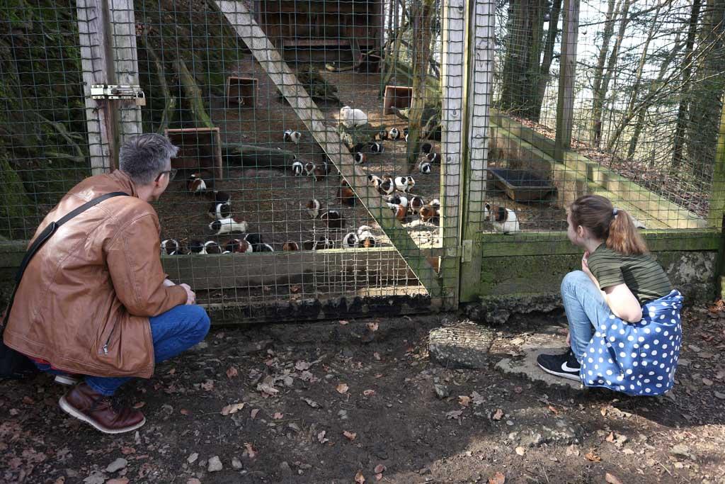 Gerard en Maureen kijken bij het hok met de cavia's