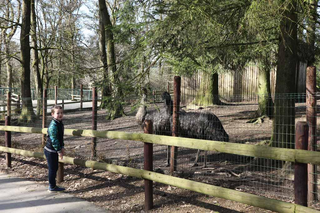 Camiel kijkt bij de struisvogels.
