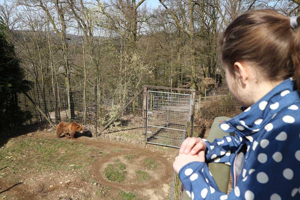 Maureen kijkt naar de bruine beer