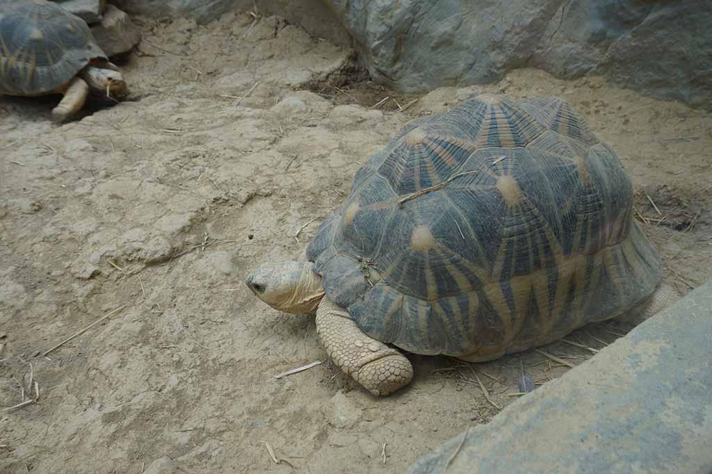 Een flinke schildpad