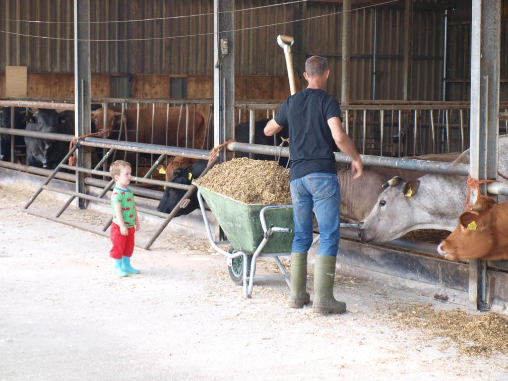 Kijken bij de koeien en ondertussen de boer helpen.