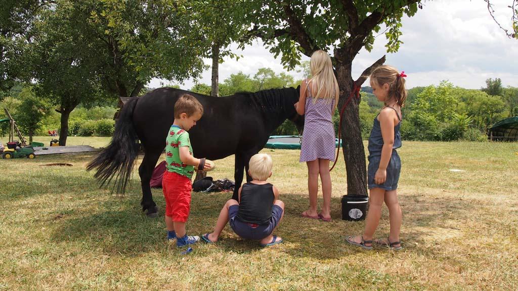 Kinderen vinden een pony op de camping meestal erg leuk.