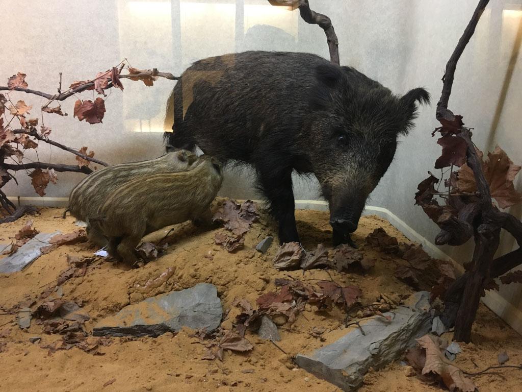 Er zijn heel veel dieren te zien in het museum