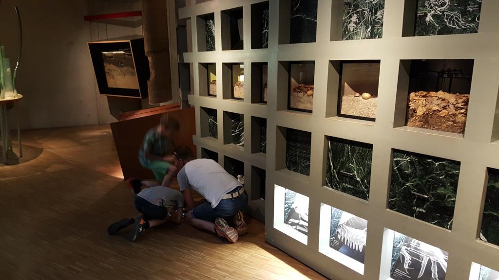 In het Museonder leer je van alles over het leven onder de grond.