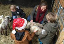 Dieren knuffelen bij Belevenisboerderij Schieveen.