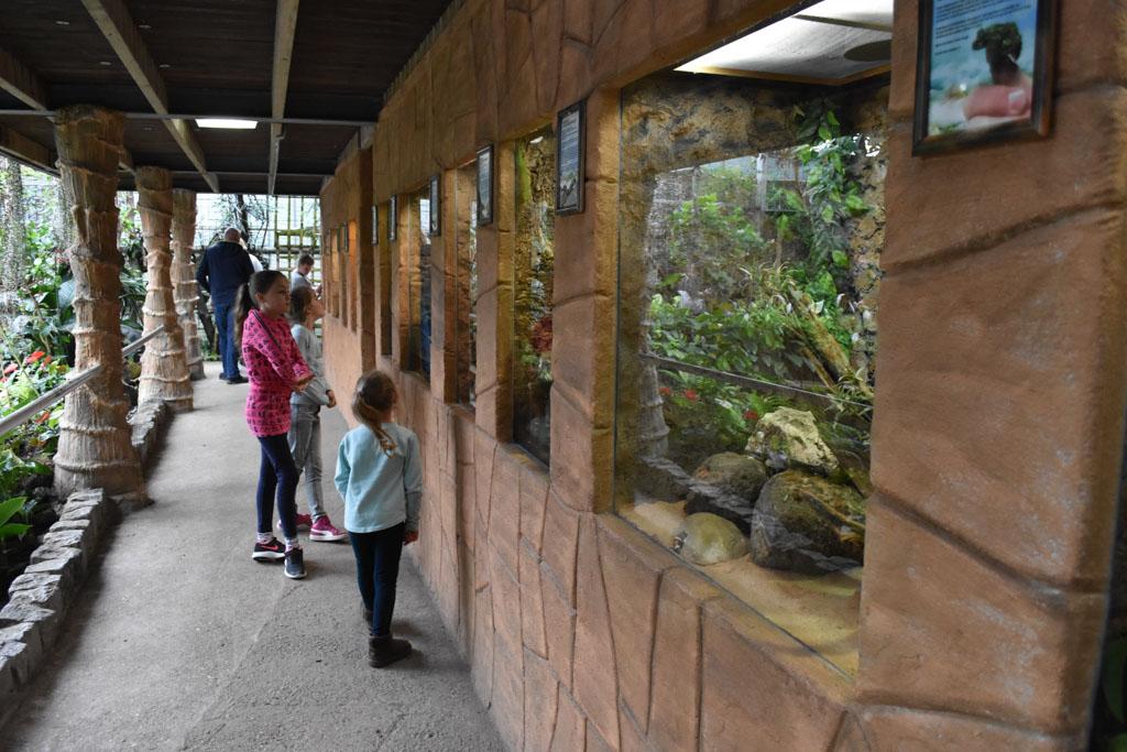 Kijken bij de kikkers en andere kleine reptielen