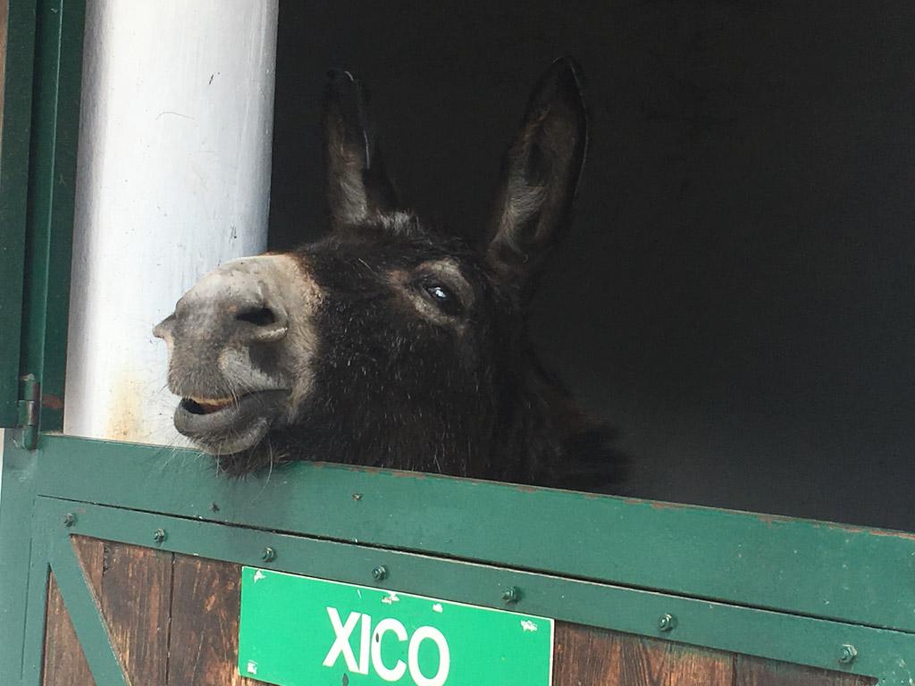 Er zijn ook leuke ezeltjes