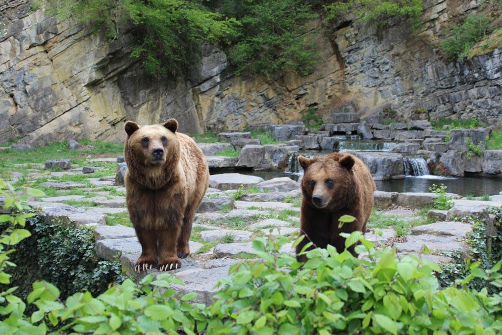 De wandelroute eindigt bij het verblijf van de bruine beren.