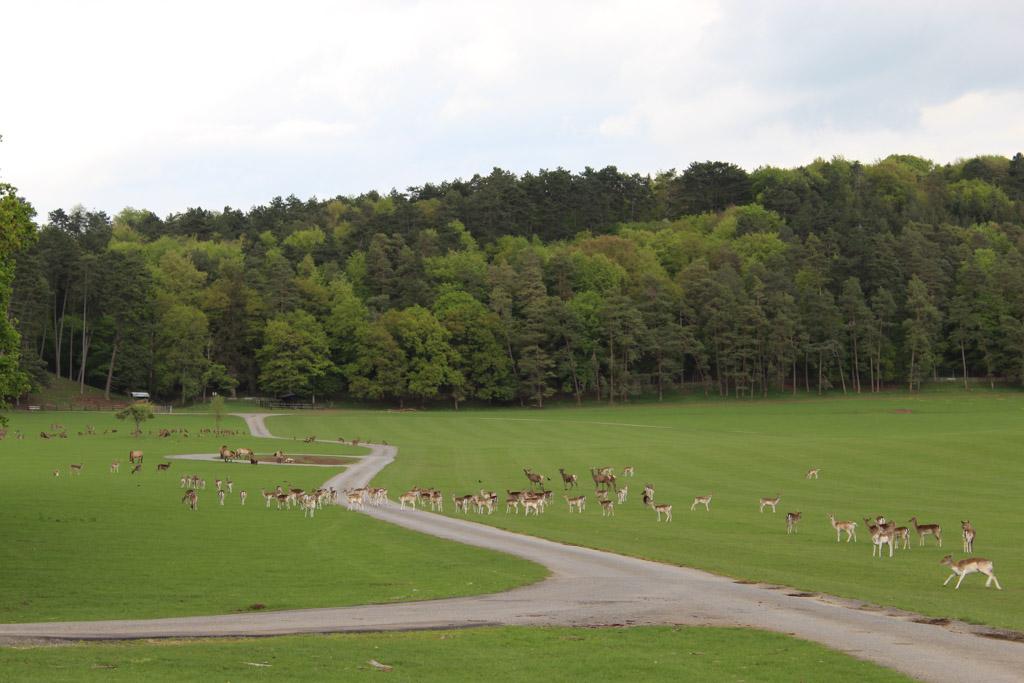 In de vallei van het wildpark leven veel (semi)wilde dieren, zoals damherten, moeflons, oerossen en wilde paarden.
