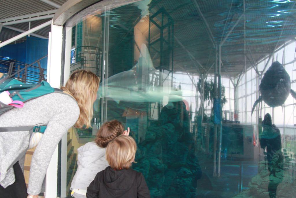 Haaien bekijken in de tank van het Oceanarium.