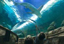 Kijk daar! Een haai!