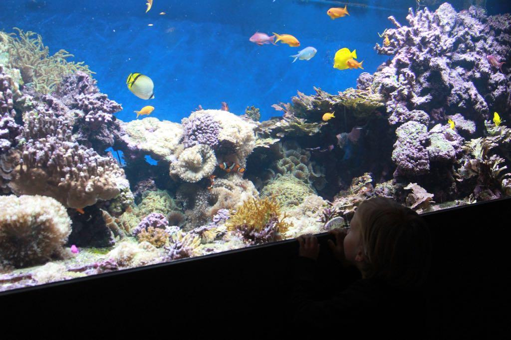 Tropische vissen in allerlei kleuren.