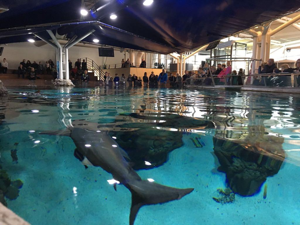 Het Oceanarium.