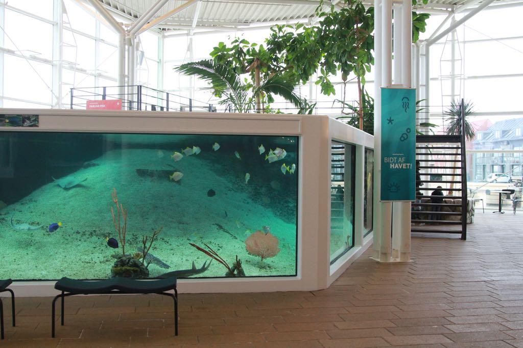 Een van de vele aquariums.