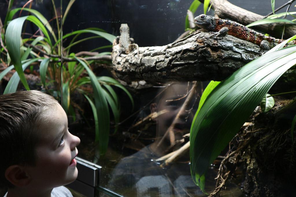 Oog in oog met een van de reptielen.
