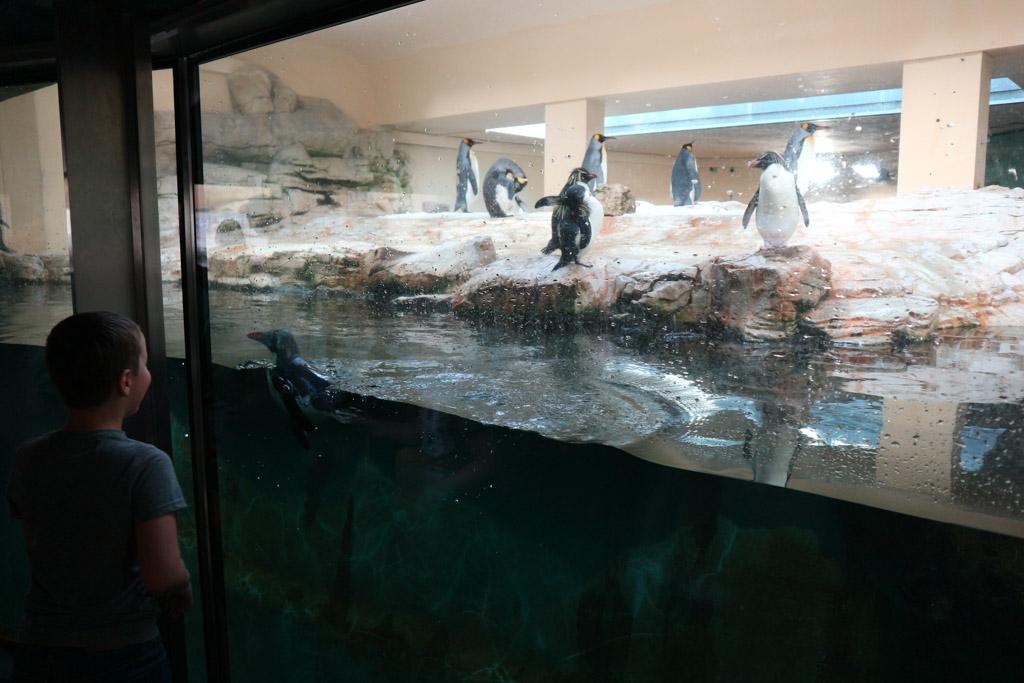 De pinguins zijn ook al zo leuk.
