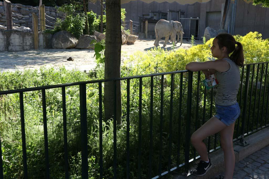 Maureen d'r lievelingsdier: de olifant.