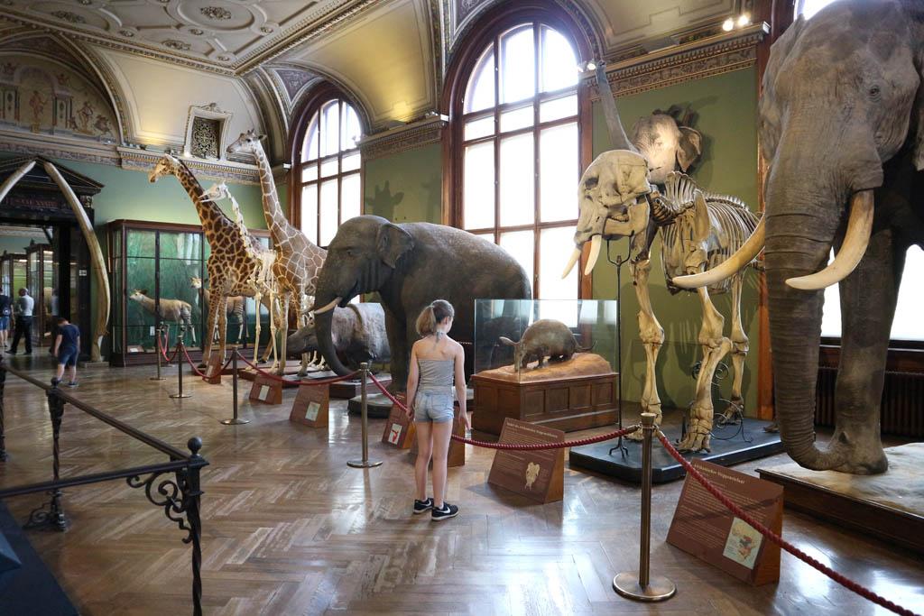 Heel veel opgezette dieren, erg indrukwekkend om zo dichtbij deze grote jongens te staan.