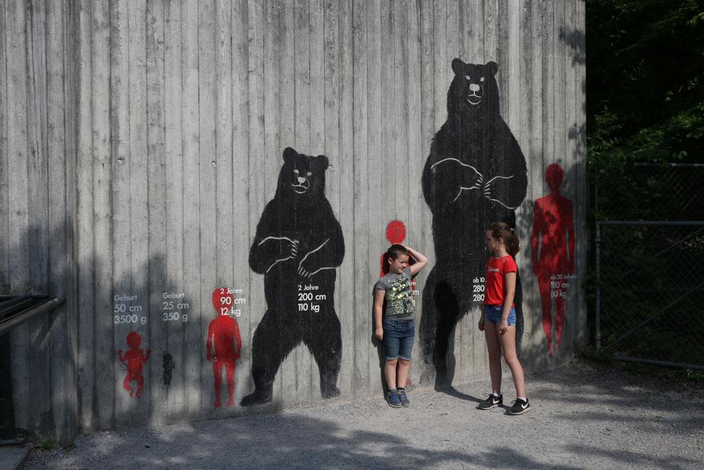 Beren zijn best groot!