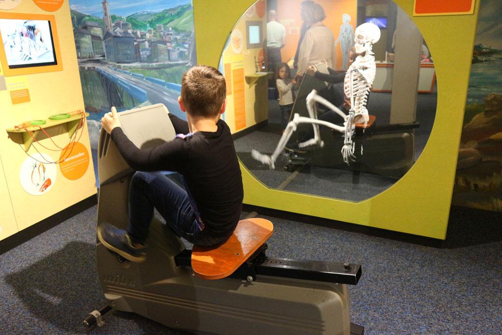 Ontdekken hoe het menselijk lichaam werkt.