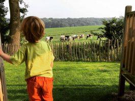 Airlodge_koeien-voor-de-deur-6