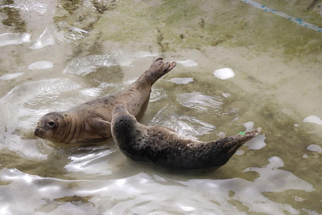 We zien grote en kleine zeehonden.