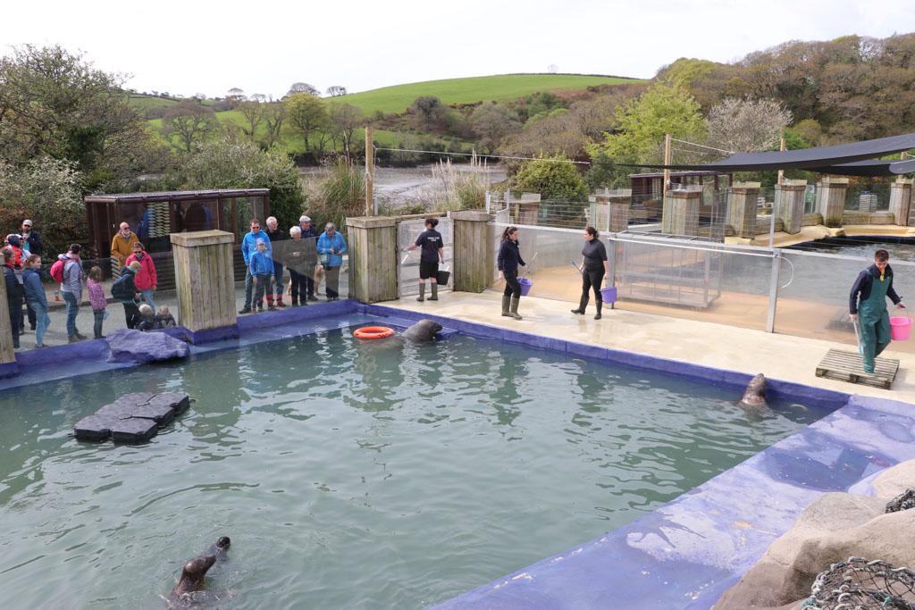 Uitgebreide uitleg over de opvang en het trainen van de zeehonden om ze weer vrij te laten.