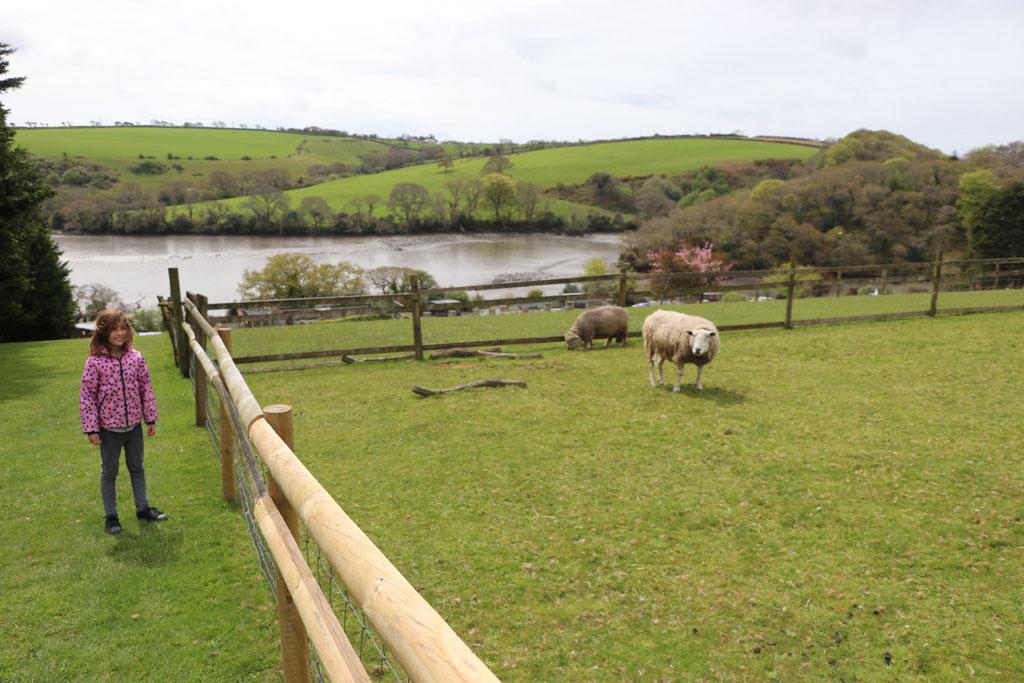 Langs de Engelse schapen.