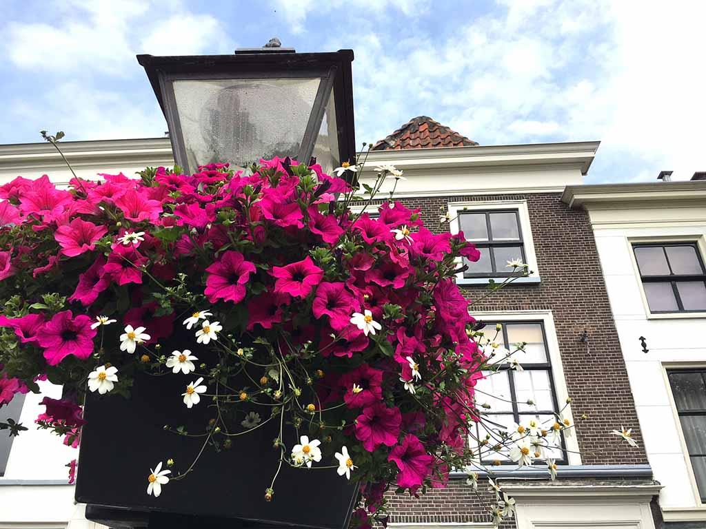 Ook aan de lantaarnpalen hangen de mooiste bloemen