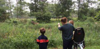 'Kijk, elanden!'
