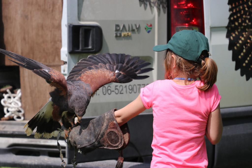 Jongste dochter vindt het spannend die grote vogels maar werkt goed mee.