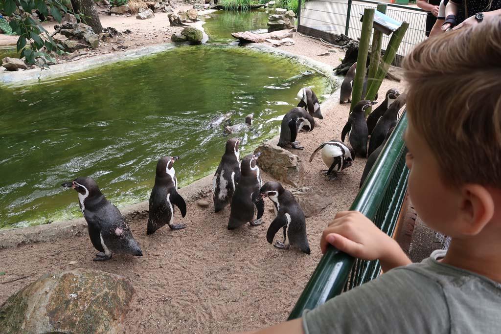 Kijken bij de pinguïns. Er zijn veel vogelsoorten in Avifauna.