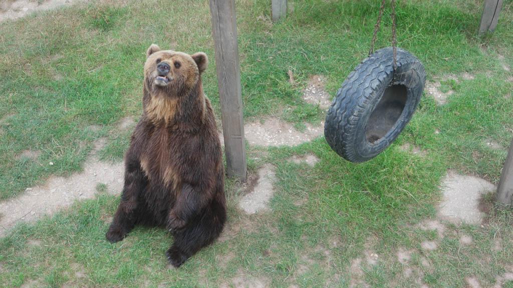 Toch wat mixed feelings bij de kunstjes die deze beer doet om voer te krijgen.