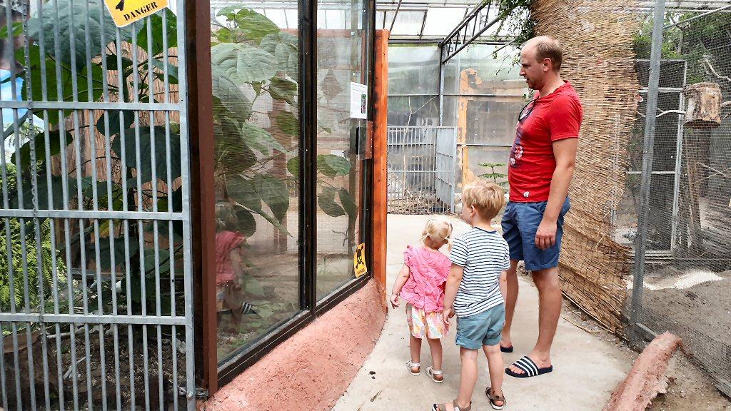 Gelukkig staat de Gympie Gympie, de meest pijnlijke plant ter wereld, achter glas