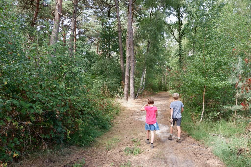 Schaduwrijke deel van Boswachterspad Vennenroute